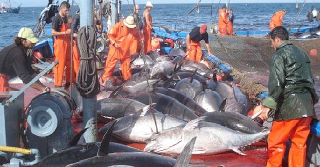 L'accord de pêche Maroc-UE adopté par la Chambre des représentants