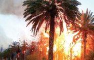 Plus de 2.540 palmiers ravagés par le feu dans l'oasis de Ziz à Aoufous