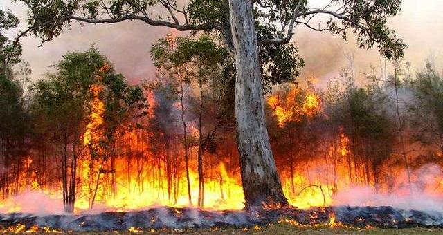 Incendie: 300 hectares de la forêt Akemsane ravagés par le feu