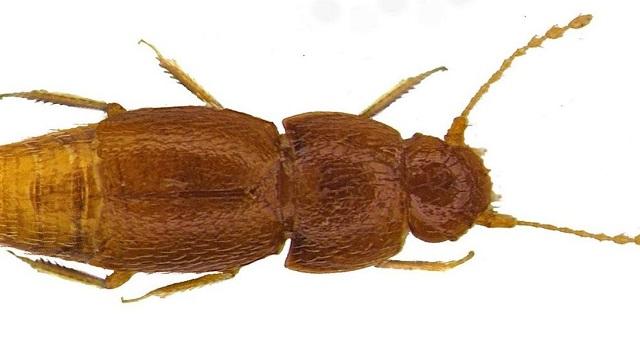 Insolite: Un insecte nommé Greta