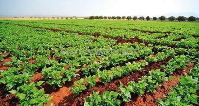 Campagne agricole: Mise en place d'un programme de sauvegarde ciblé