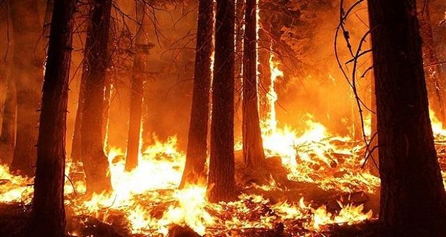 Tanger: La forêt diplomatique ravagée par les flammes, le feu est circonscrit