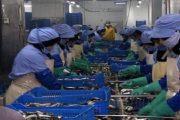 Le procureur du Roi décide de poursuivre des responsables d'une unité industrielle de conserve de poisson à Safi
