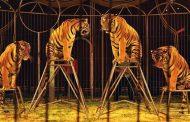 France: Bientôt plus d'animaux sauvages dans les cirques itinérants