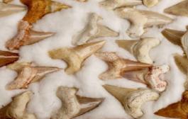 La France restitue au Maroc 25.500 pièces archéologiques saisies en 2005 et 2006