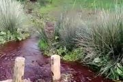 Coloration rouge des eaux de l'oued de Bouskoura, le département de l'environnement rassure