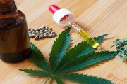 Les usages médicaux et industriels du cannabis, vers une nouvelle industrie au Maroc
